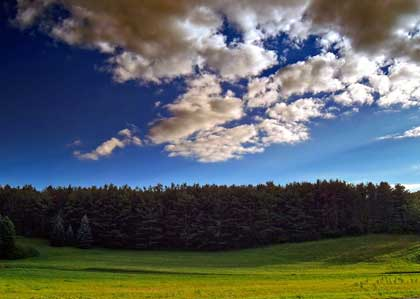 field surrounded by evergreen trees - photo by Nicholas