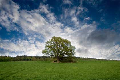 tree in field against a beautiful cloud - photo by Tomhe