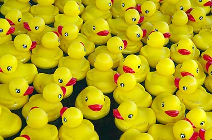 rubber duckies floating - photo by Idle Type