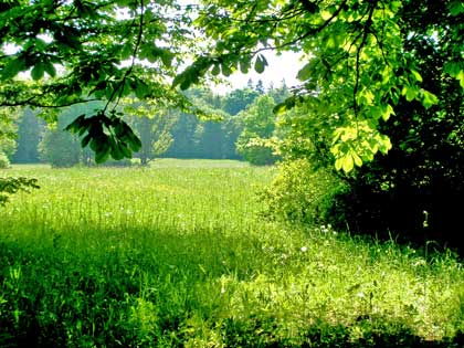 green field surrounded by trees - photo by Astkam