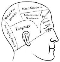 Phrenology head with large labels