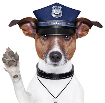 police dog warning with paw up